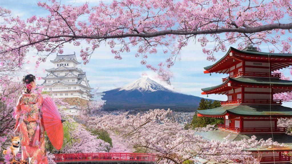 Vận chuyển thanh long sang Nhật Bản